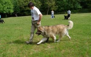 2013.05. Kaposvár  ,Best Dog Kutyaiskola