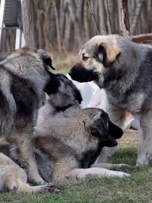 4. Négy Kutya Együtt