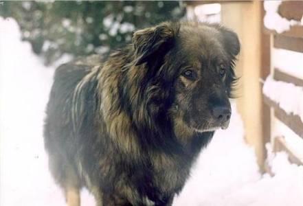 Athos 2001
