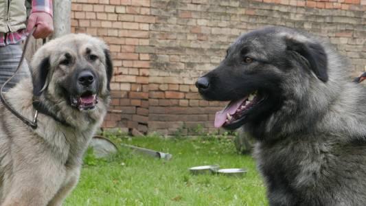 Baska és Sokol (2)