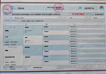 CeliaLuna Tk1
