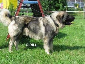 CIRILL