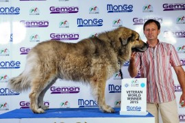 World Dog Show 2015 Milano - Karabas Restelicki VETERAN WORLD WINNER